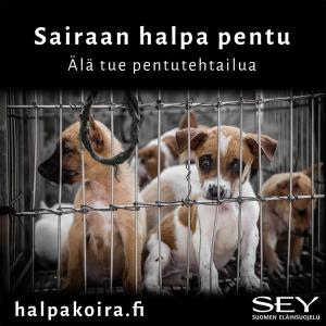 Koiria häkissä